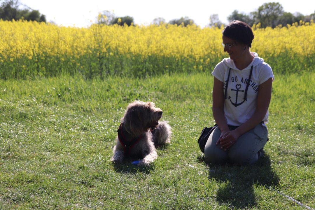 Verhaltenstherapie Hund Katrin Voigt