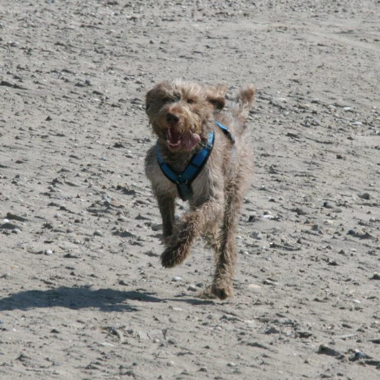 Hundetraining-rennender-Hund