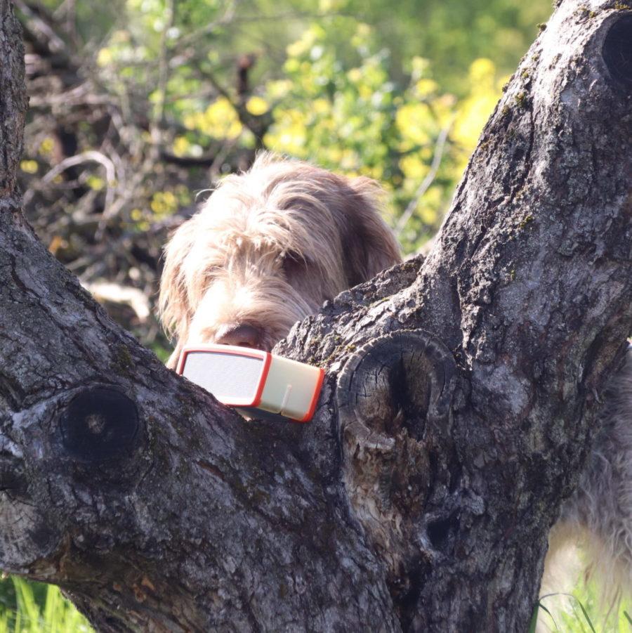 Hundeschule Dr. Katrin Voigt