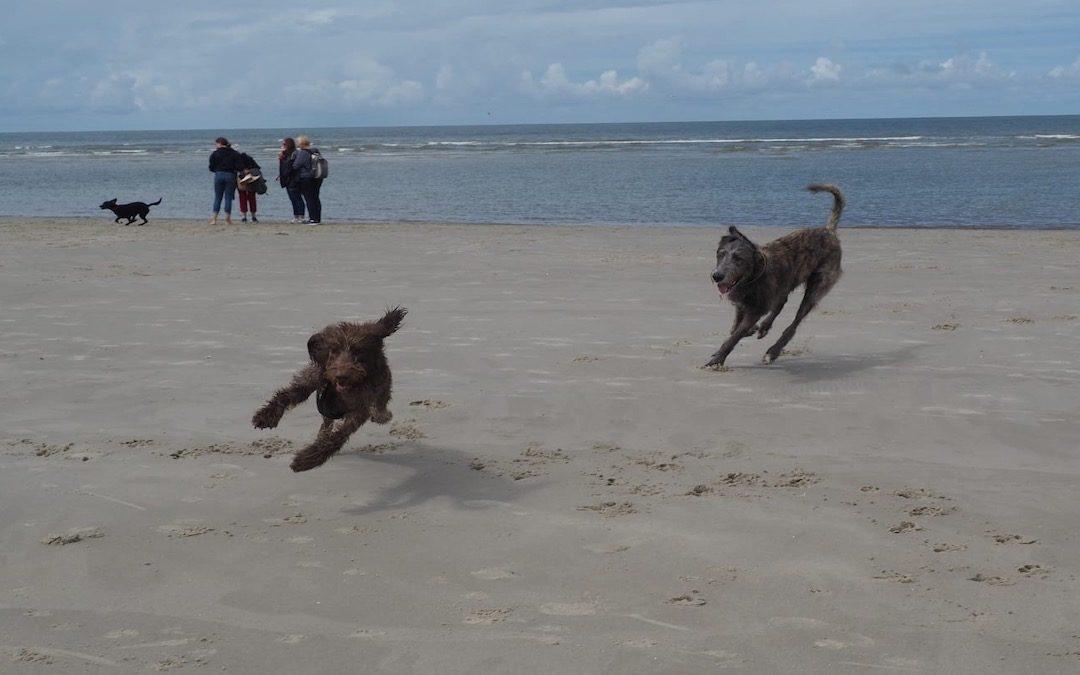 rennende Hunde