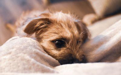 Der Tierschutzhund – ein Traum wird zum Alptraum
