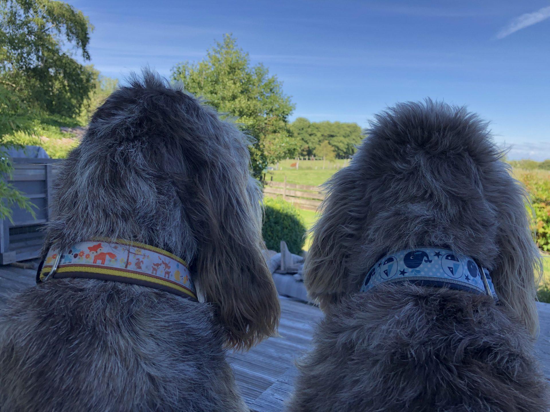 Hundeerzieher und Verhaltensberater